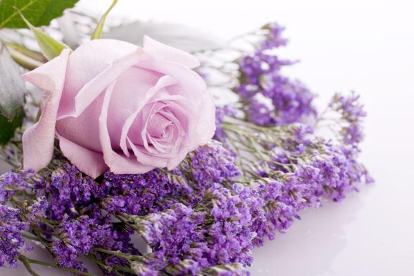 Packung: Lavendel-Rosenholz Packung