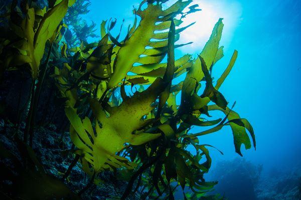 Enveloppement: Enveloppement aromatique aux algues